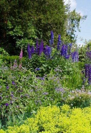 Herbaceous border photo