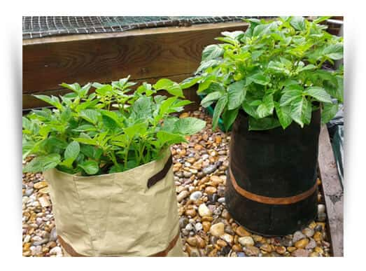 Potato bags