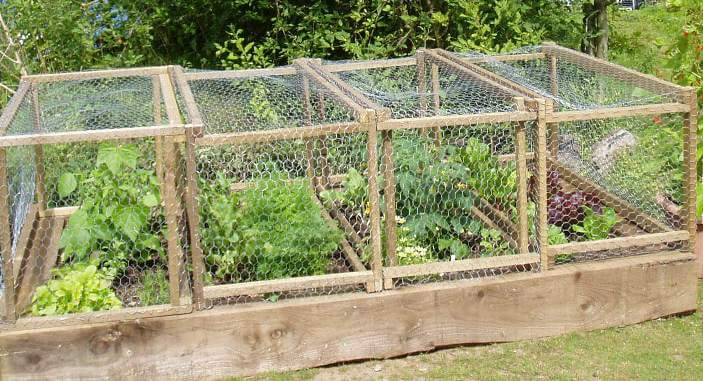 Photo of Raised bed anti rabbit