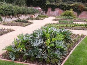 Veg garden photo