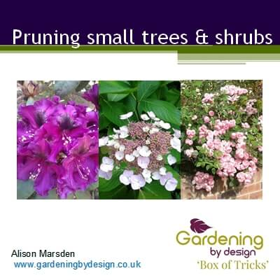 Topic Pruning small trees and shrubs image