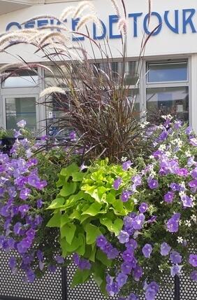 Street planter photo