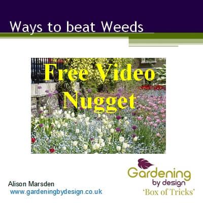 Ways to beat Weeds photo