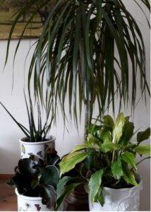 Houseplants photo