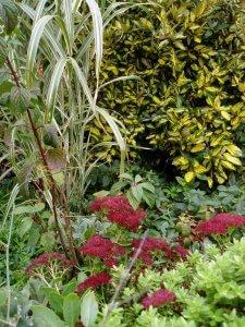 Coloured foliage photo