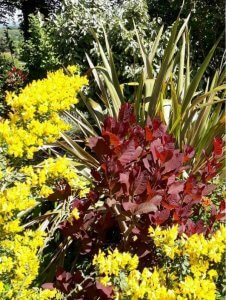Coloured shrubs photo