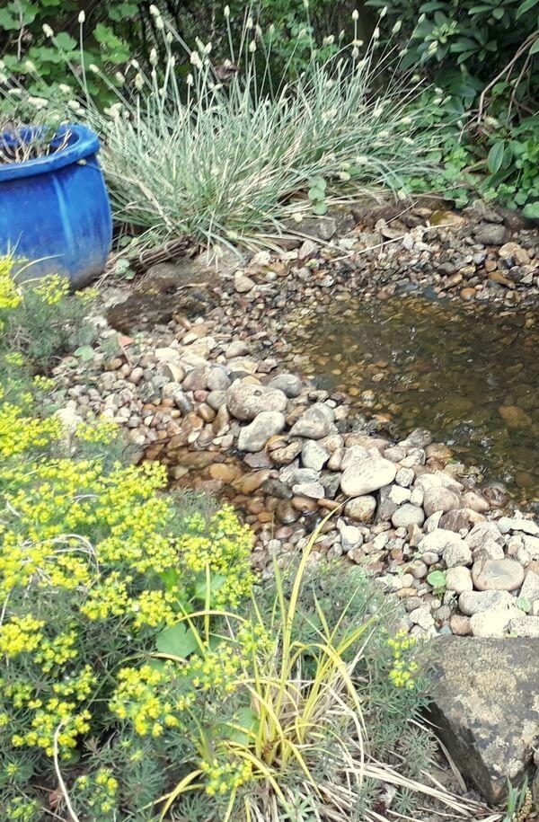 garden pool photo