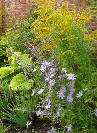 Herbaceous perennials photo