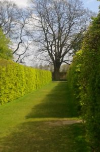 Clipped hedges photo