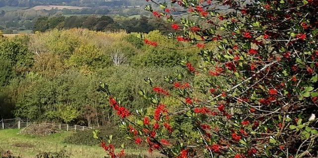 English landscape photo