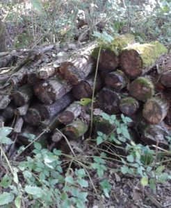 Wildlife log pile photo