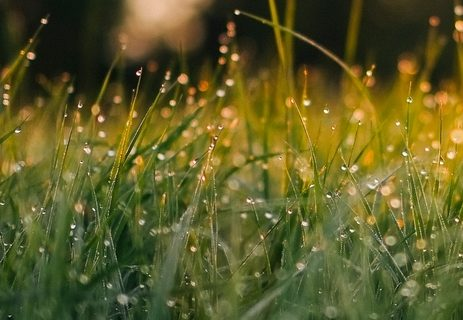 Grass with dew photograph